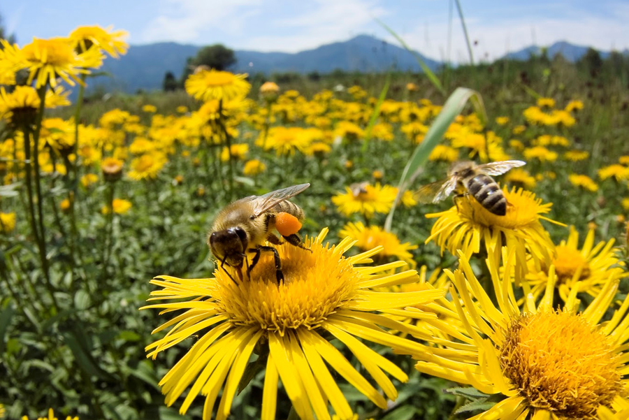 Help Save the Bees at Lassens Natural Foods & Vitamins