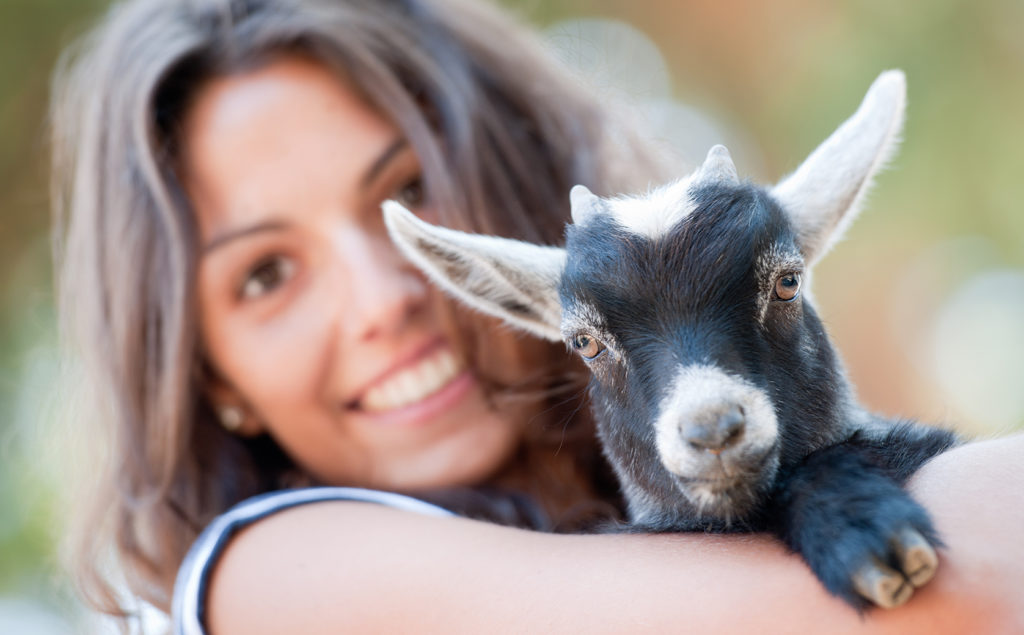 Goat Yoga with YoGoat LA